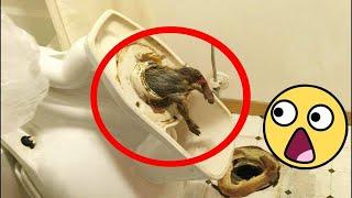 انظر ماذا قد يوجد في حمامك.. أغرب سبعة أشياء عثر عليها داخل المرحاض
