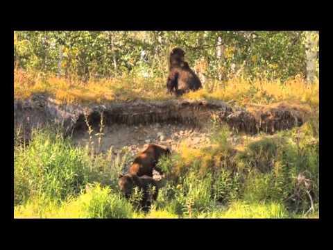 Орёл и Решка