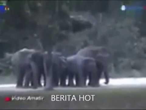 heboh!!! Gajah bersujud kepada Allah
