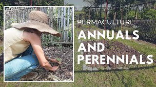 Permaculture | How to plan your Perennials