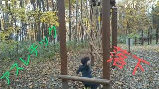 春光台公園で、アスレチックをやったよ!