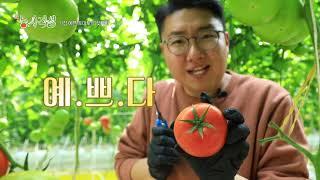 [新농사직설 36회] 창원토마토스마트팜