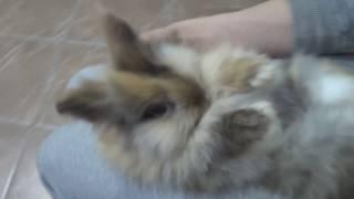 Кролики Зайчики. Декоративный кролик.