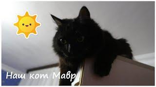 VLOG: Наш кот / Покупки обуви и продуктов / Вкусный тортик / OrenMama Vlog