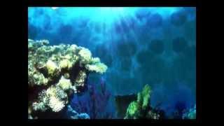 Dia 22 de Março Dia Mundial da Água Free HD Video