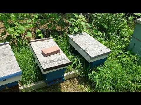 Barnyard Bees Mowing Weedeating Around Bee Hives