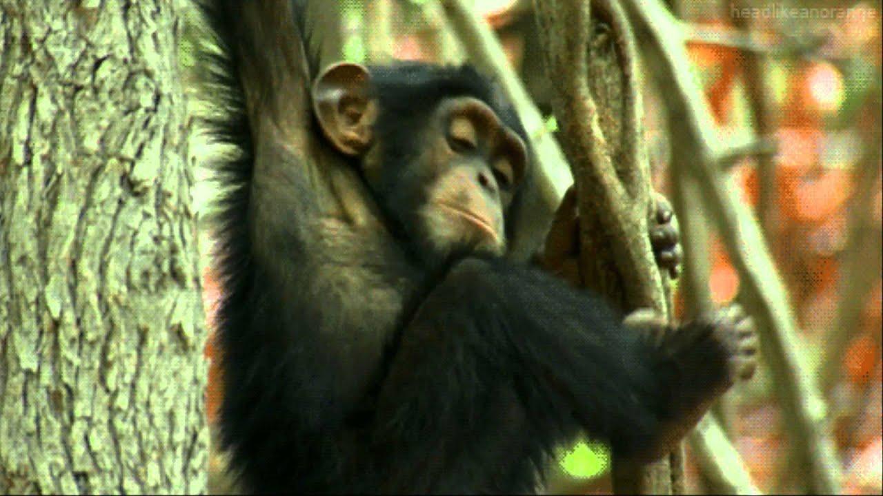 назвала смешные гифки обезьян вами представлен один