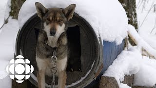 Sled Dogs Official Trailer | Documentary Specials | CBC