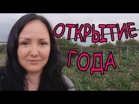 Вопрос: Малина Янтарная Садко , что за сорт?
