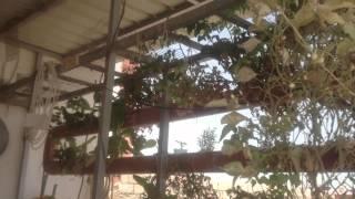 kuwait : Rooftop Farm  Aquaponics