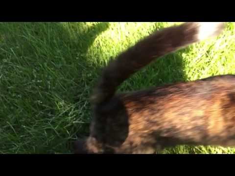 Cat attack slow motion