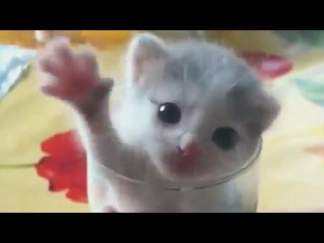Faze comice cu pisici haioase 😄 pisicute amuzante 😄 citeste descrierea