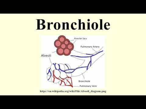 Bronchiole
