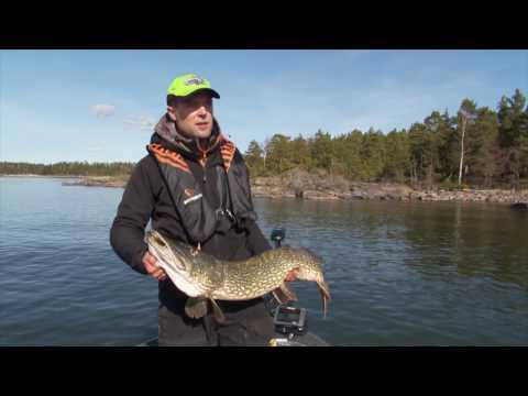 Predatortour Sweden at Sportfishing Dalsland - Fish on!