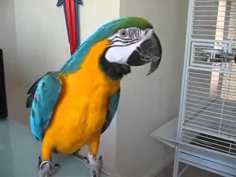 скачать бесплатно говорящего попугая - фото 9