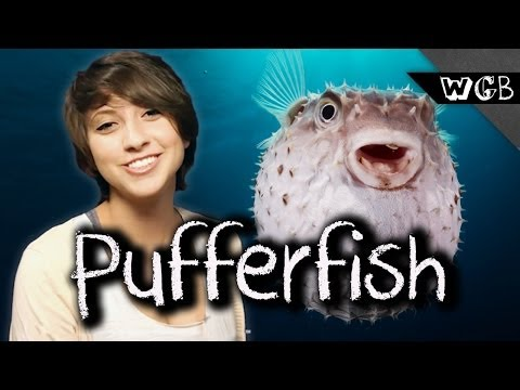 How Many People Can A Pufferfish Kill?