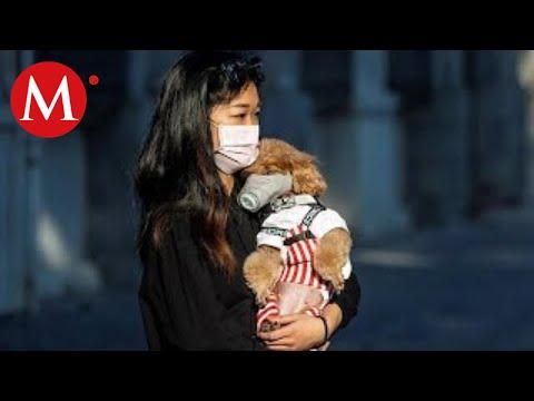 Perrito En Hong Kong Podría Tener Coronavirus