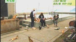 9日は、「猫の島」として知られる男木島です。男木島の猫は観光客に人気...