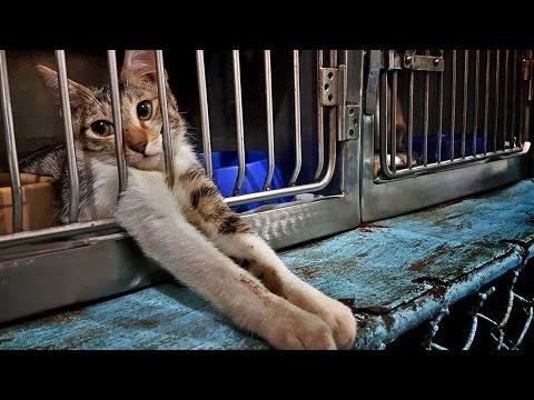 Animal Welfare is Human Welfare. Anna Cabrera, PAWS Executive Director • Banzski Documentary