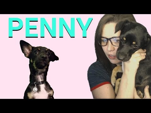 Penny is a Good Dog!