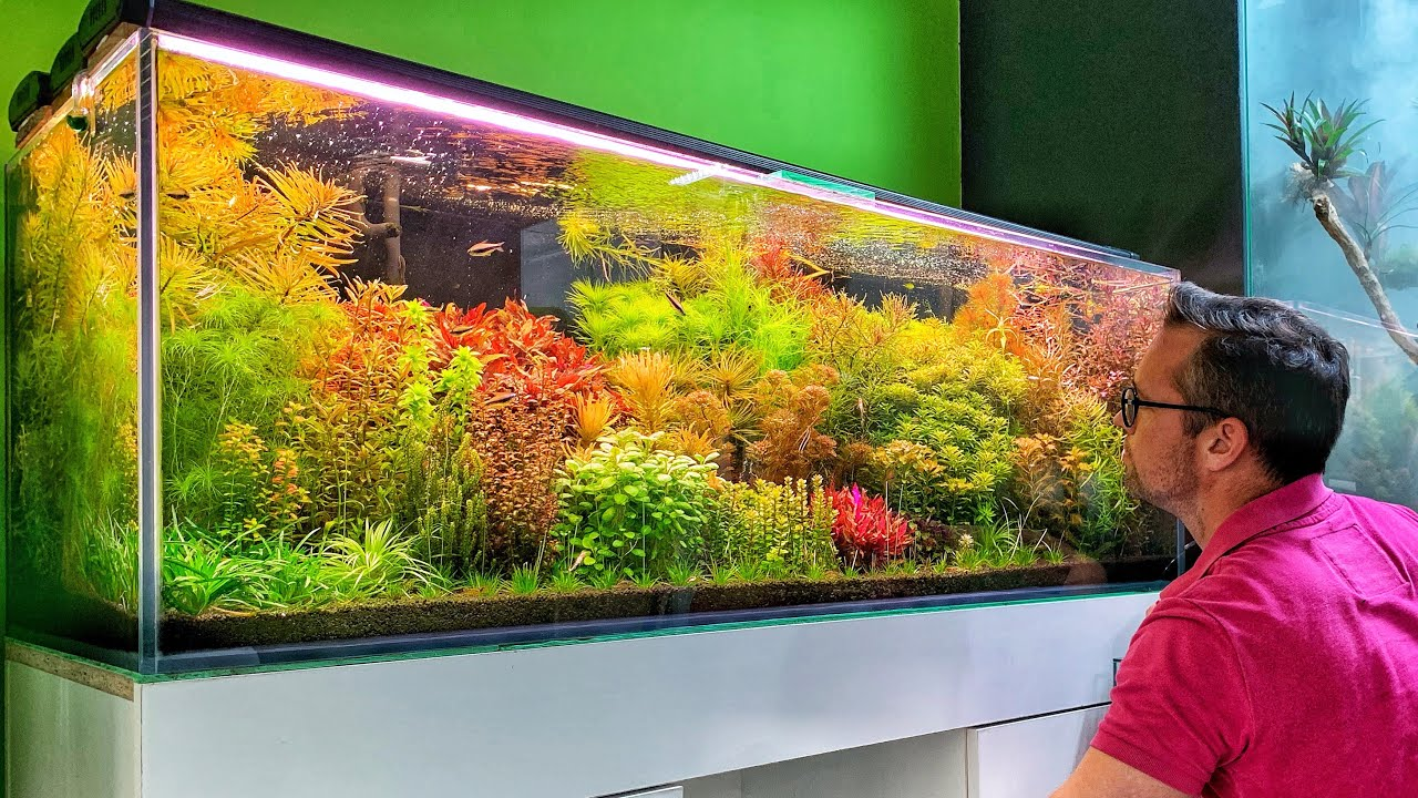 Beautiful Aquascape Store in Poland - Green Art 🇵🇱💚 - YouTube