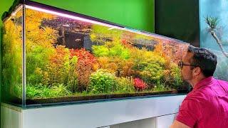 Beautiful Aquascape Store in Poland - Green Art 🇵🇱💚