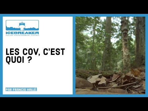Episode 08 : Les VOCs
