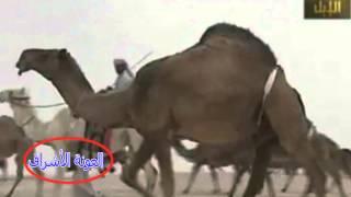 أجمل منقيات الصفر للأمير فيصل بن سعود الكبير