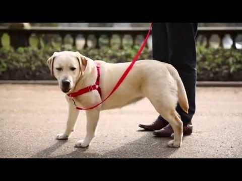 rozmiar 7 wyprzedaż resztek magazynowych na stopach zdjęcia EasyWalk - szelki treningowe dla psów - YouTube