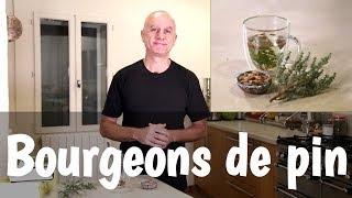 Bourgeons de pin : problèmes respiratoires, infections urinaires, douleurs articulaires