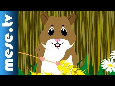 Vilmos Gryllus: Hamster | Half Minute Song | MESE TV thumbnail