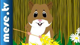 Vilmos Gryllus: Hamster | Half Minute Song | MESE TV