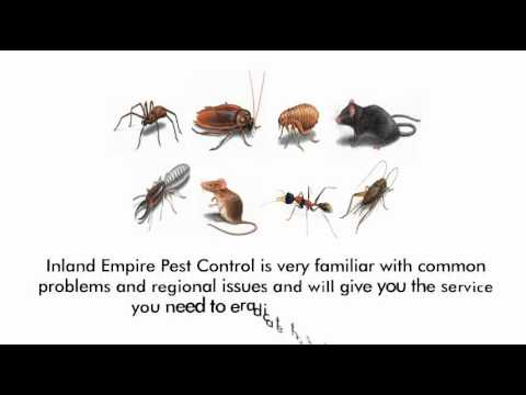 bed bug inspection inland empire 909-824-4026, also serving orange