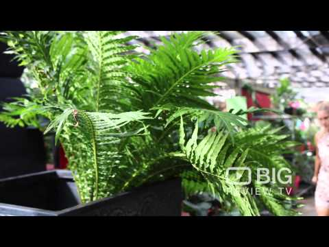 The Plant Shack a Garden Centre in Brisbane offering healthy Plants