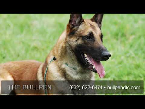 The BullPen Dog Training Center LLC | Pet Training in Pearland