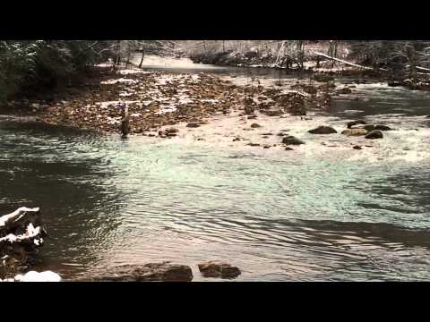 Elk springs resort wv for Elk river wv trout fishing