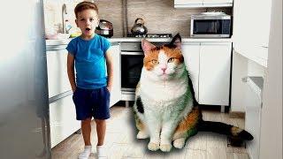 КОШКА ВЫРОСЛА И СТАЛА ОГРОМНОЙ!!! Очень большая кошка. Видео для детей.