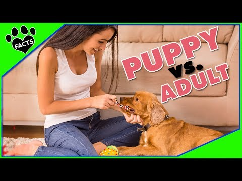Puppy vs. Adult Dog - Which to Adopt - Animal Facts