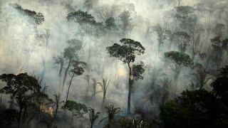 Deforestation in Brazil's Amazon reaches 12-year high under Bolsonaro