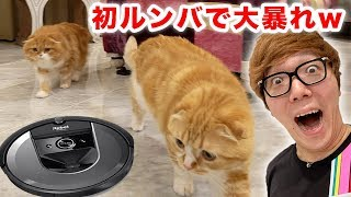 I bought the latest, greatest Roomba, and Maruo & Mofuko are going crazy