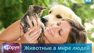 Животные в мире людей. Форум