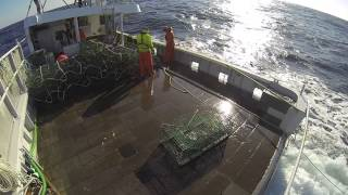 Setting back a trawl of lobster traps in the North Atlantic. January 12th 2014