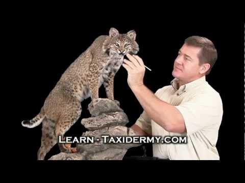 Learn Taxidermy from home - Video courses teach how to do taxidermy