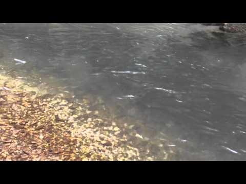 La pêche à blagovechtchenske vidéo