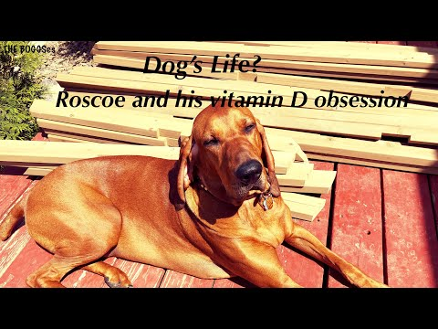 Dog's Life | Roscoe Episode 2
