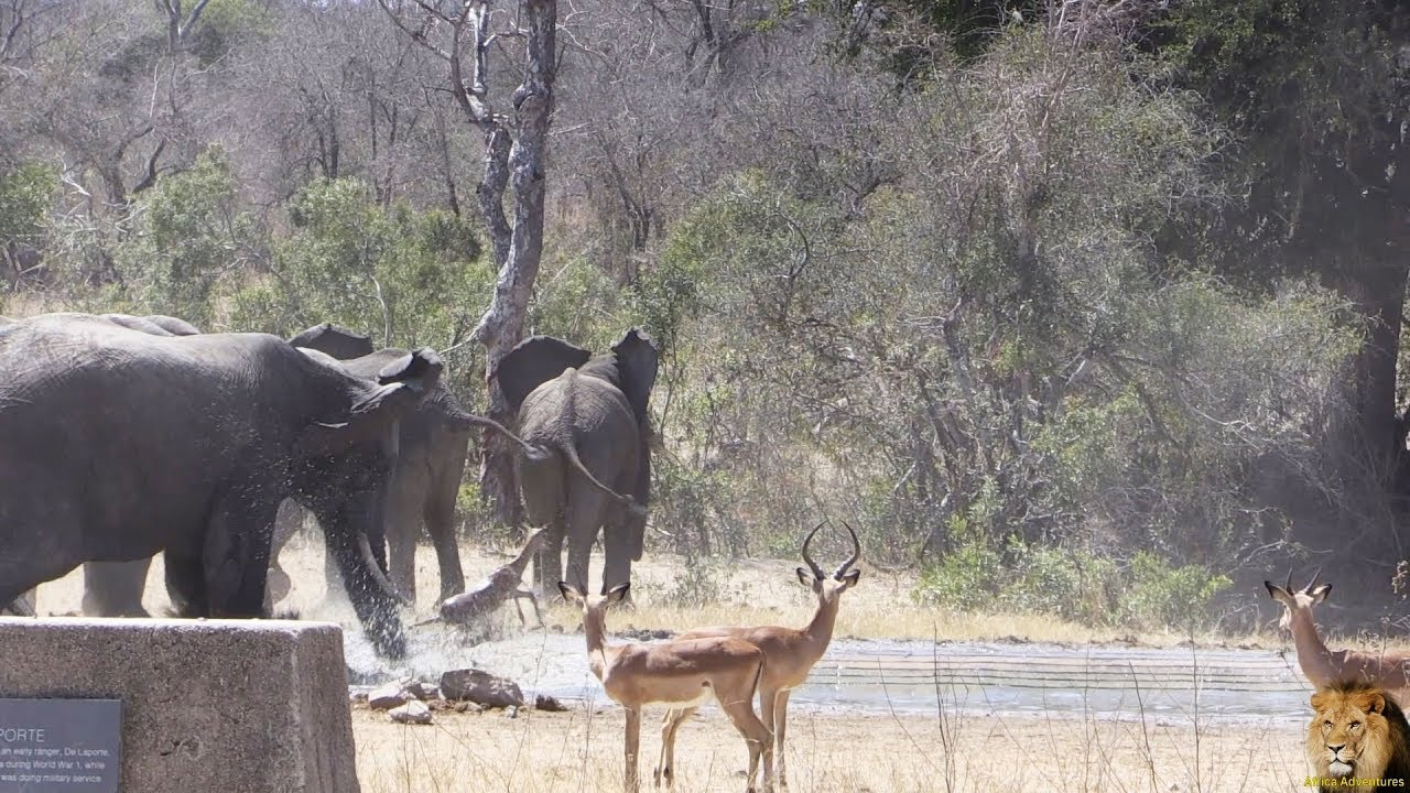Most Amazing Ever 