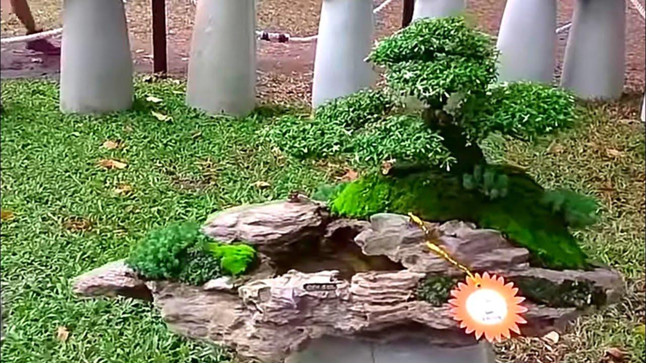 Bonsai Penjing Landscape Dan Bonsai On The Rock Youtube
