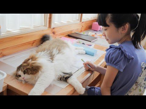 ドリルの上でくつろぐ猫のせいで夏休みの宿題が進まない