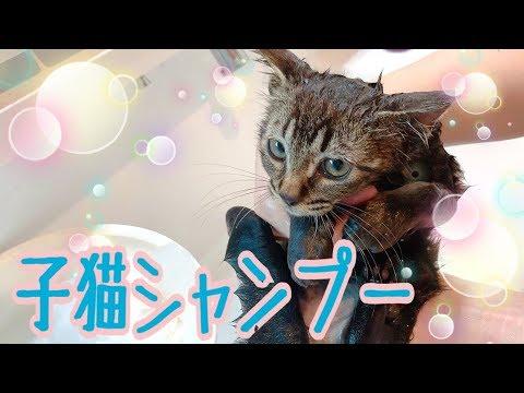 保護した子猫のシャンプーしてみた