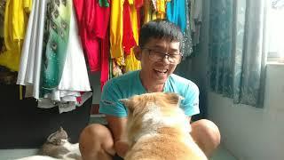 Mèo Biết Nói Và Thú Cưng Nhà Nghệ Sĩ Lưu Danh    Thành Ngữ Hay Về Chó Mèo    MC Trần Kim Phong